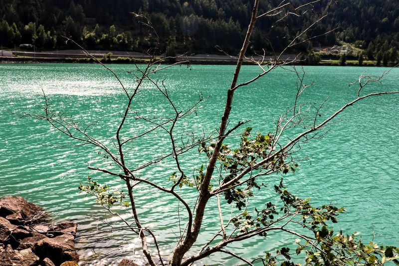 Lago di Poschiavo Poschiavo Lago Di Poschiavo Graubünden Switzerland Switzerland🇨🇭 Alpen Lake EyeEm Selects The Great Outdoors - 2018 EyeEm Awards Outdoor Summer Natur Tree Water Lake Sunlight Sky Close-up Green Color Countryside Greenery Flora