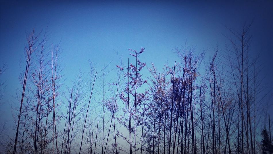 Nature Trees Blue Sky Forest