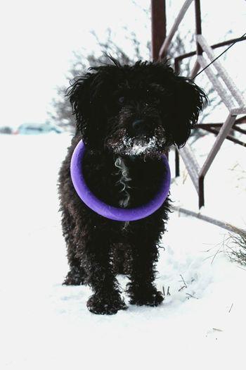 My Dog <3 Hi! I Love My Pet Chapa Dog Dog Love