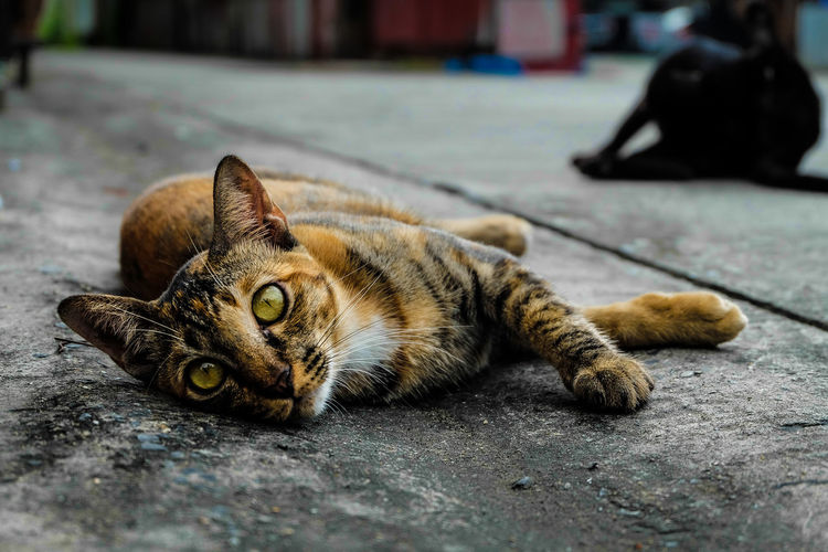 cat Looking At Camera Cat Citty Citty Cat Eye Look Minimalism Street Streetphotography