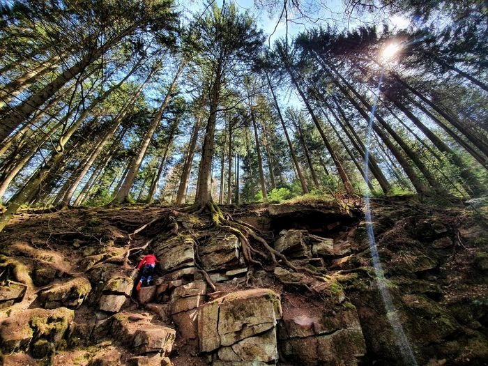 Low angle view of trees against rocks in forest
