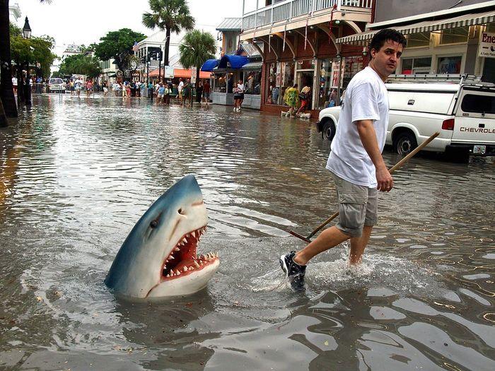 Curiosities Flood Flooding Florida Fun Funny Hai Haiattacke Hochwasser Keywest Keywestflorida Keywestlife Kurios Kurioses  Shark Shark Attack Sharkattack Sharks White Shark überschwemmung Here Belongs To Me