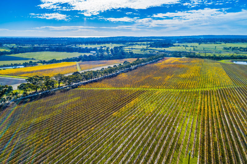 Huge vineyard on bright autumn day in Australia - aerial view High Up Horizon In A Row Landscape Meadow No People Panoramic Red Hill Rural Scene Sky Sunlight Travel Locations Tuerong Vineyard Yabby Lake Aerial Agriculture Australia Autumn Background Beautiful Beauty Country Drone  Fall Field Grapes Grass Green Growing Melbourne Mornington Nature Outdoors Panorama Peninsula Scenic Shīrāz Tourism Travel Travel Destinations Tree Victoria View Vines Viticulture Wine Winery