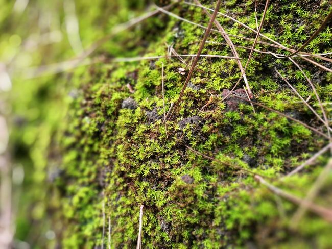 Las Raíces Tenerife Nature Green Color Tree Beauty In Nature No People Forest