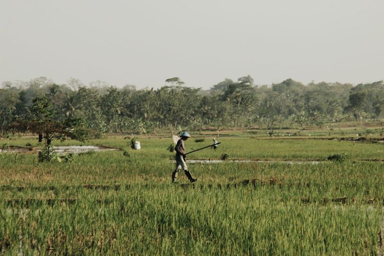 Man walking on agricultural field