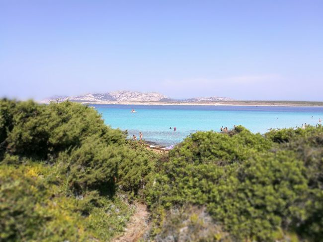 Sea Water Tranquil Scene Tree Scenics Blue Tranquility Green Color Clear Sky Plant Beach High Angle View Beauty In Nature Growth Nature Non-urban Scene Green Vacations Tourism Lush Foliage Stintino Sardegna Sardinia Italia Italy