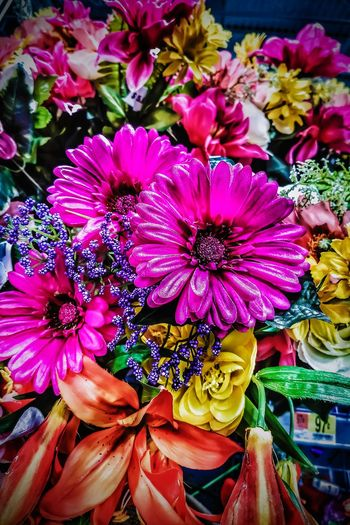 I enjoy bright colours. Flower Beauty In Nature EyeEm Gallery Tadaa Community For My Friends That Connect CreativePhotographer Hdr_Collection From Where I Stand Eye4photography  Streamzoofamily Art Inspired By Life Malephotographerofthemonth Popular Photos Hdr Edit Hdr_gallery Flowers, Nature And Beauty Flower Porn Flower Head Beauty In Nature Multi Colored Looking At Camera