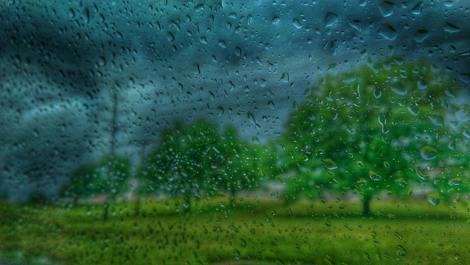The Impurist Raindrops Through The Glass Treetastic Treesome Electr⚡️cal L❤️ve We Are Nature Random Acts Of Photography