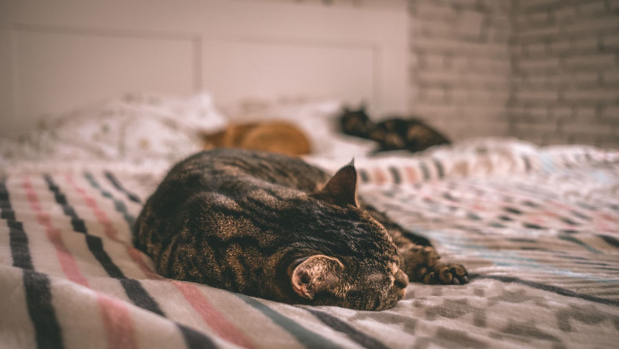 Close-up of cats relaxing on bed at home