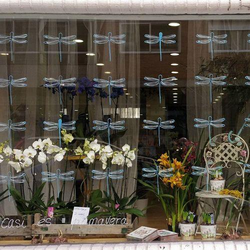 New Window Display at Alea flores | concept store. rúa Barcelona, 83 Vigo Aleafloristerias Inspiration Orquídea Phalaenopsis Yacasiesprimavera Springiscomming