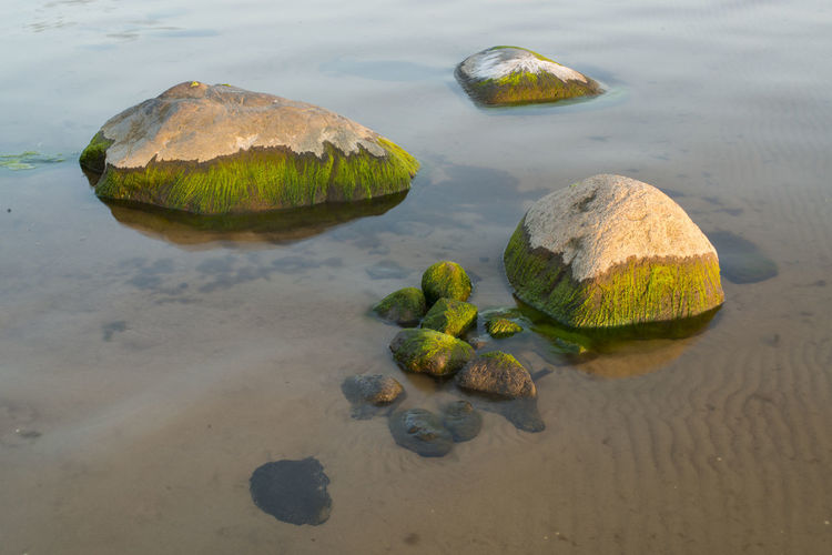 High angle view of moss covered rocks in sea