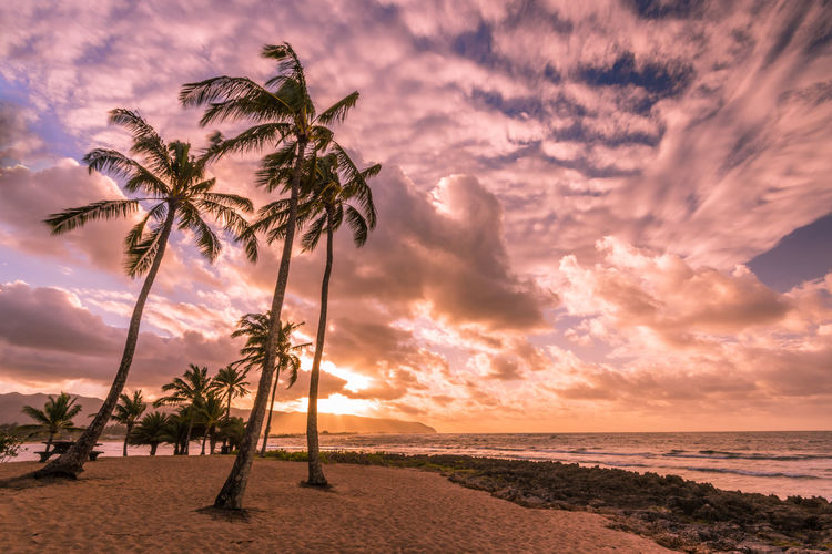 Hawaii Waikiki Island Oahu Sky Tropical Climate Palm Tree Sea Water Beach Beauty In Nature Tree Land Sunset Cloud - Sky Horizon Over Water Scenics - Nature Plant Horizon Tranquil Scene Nature Tranquility Coconut Palm Tree No People Outdoors Tropical Tree