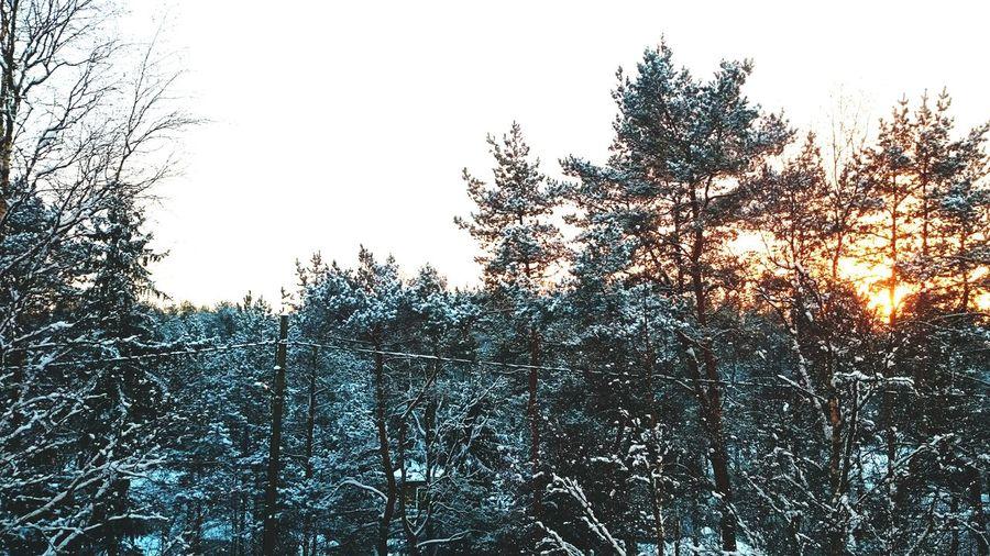 Winter wonderland Snow ❄