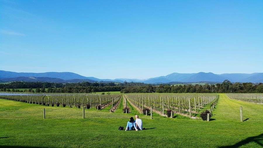 Rear view of couple sitting on grass at vineyard against sky
