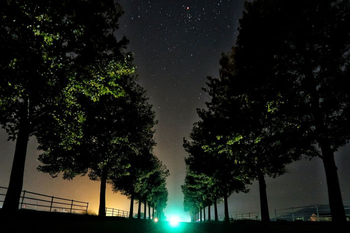 朝チャリ 早朝 並木道 アメリカフウ モミジバフウ サイクリング 木 Avenue Tree Star - Space Astronomy Low Angle View Silhouette Beauty In Nature Galaxy Night Sky Nature Scenics Illuminated Galaxy Autumn Sky 朝 日の出前 星空