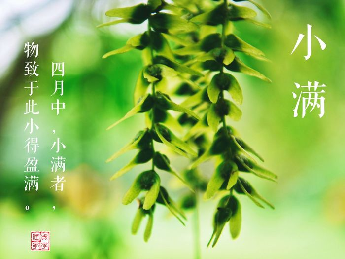 Green Color No People Close-up Text Communication Focus On Foreground Nature Holiday Celebration Tree Growth Plant Part Leaf Plant Outdoors Paper Number Non-western Script