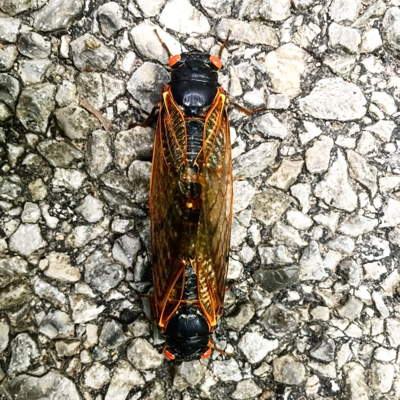 animal wildlife, animal themes, one animal, animal, animals in the wild, invertebrate, insect, no people, day, close-up, animal wing, outdoors, nature, solid, directly above, wall - building feature, wall, high angle view, stone - object, full length, butterfly - insect
