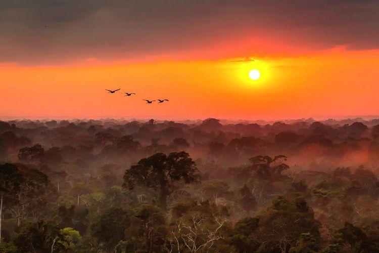 Peru Amazonas Sunrise Jungle Mist Green Love Nature Wildlife Parrot Puerto Maldonado Adventure Morning Light Incredible View Canon 5d Mark Lll Canon 24-70 F.2:8