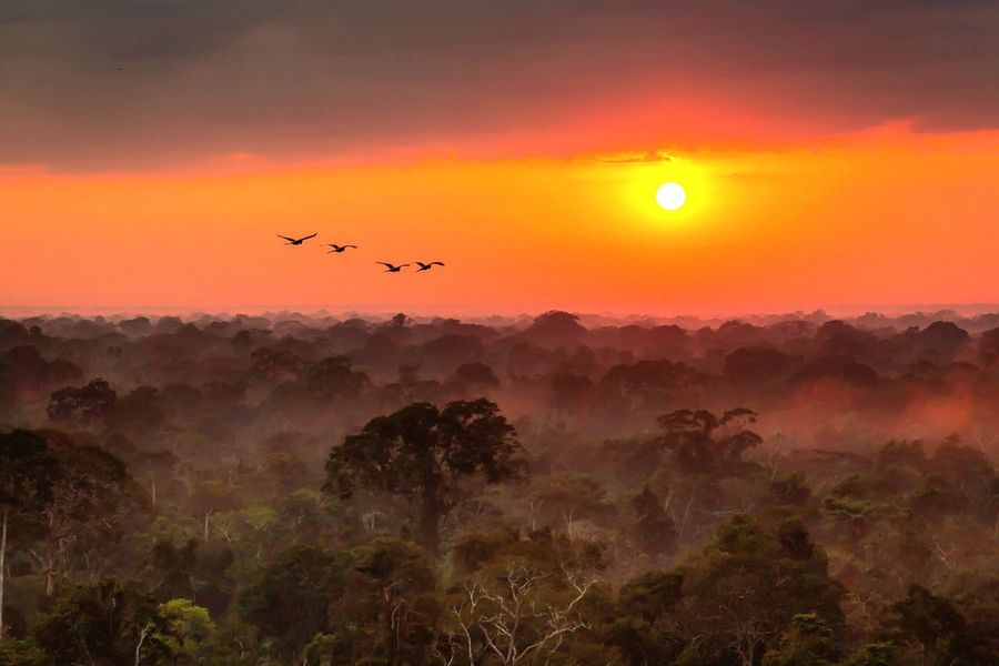 Peru Amazonas Sunrise Jungle Mist Green Love Nature Wildlife Parrot Puerto Maldonado Adventure Morning Light Incredible View Canon 5d Mark Lll Canon 24-70 F.2:8
