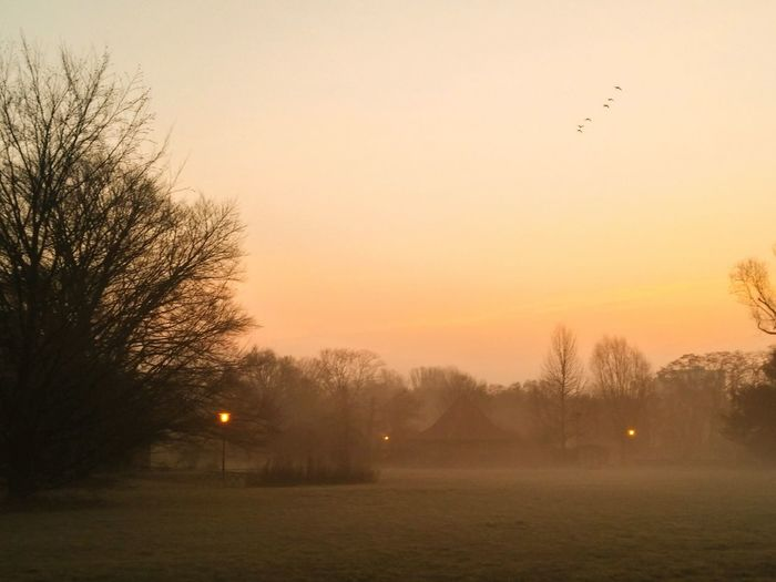 Scenic View Of Grassy Field On Foggy Weather Against Clear Orange Sky