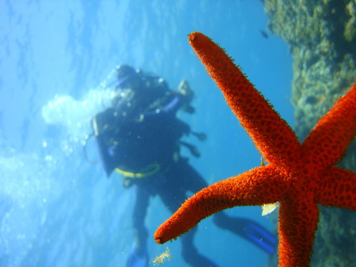 Close-up of starfish and scuba driver in sea