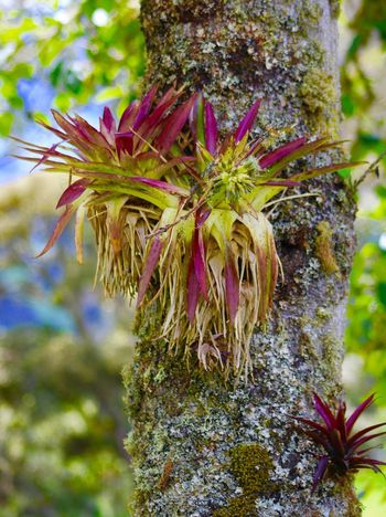 Plant Growth Flower Flowering Plant Nature Beauty In Nature Close-up Flower Head Tree