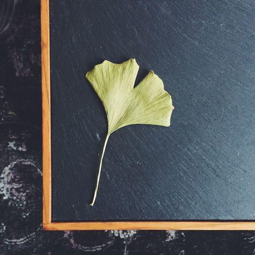 Directly Above Shot Of Gingko Leaf On Blackboard