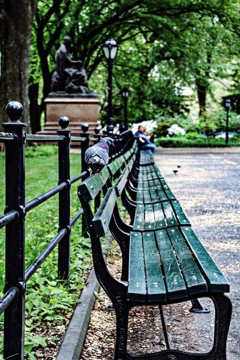 Central Park Central Park - NYC Day Nature Focus On Foreground Park Outdoors Green Color Close-up Bench Park Bench New York