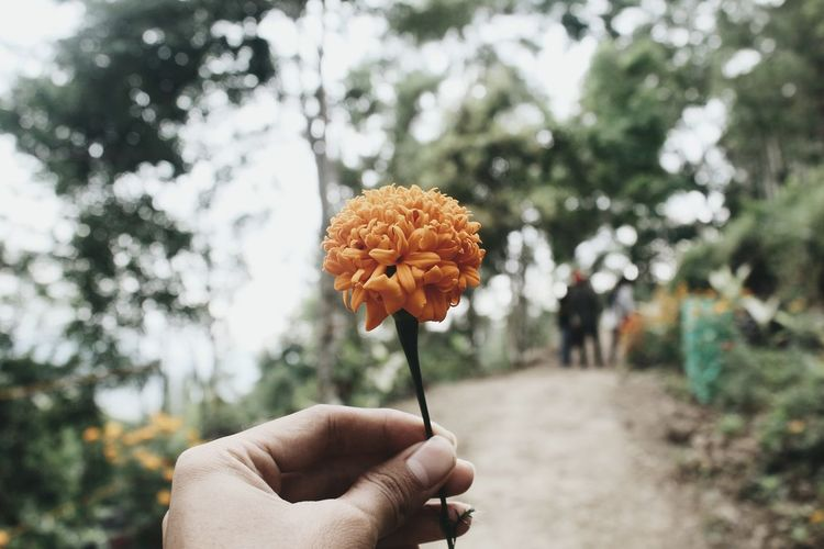 Cropped Image Of Hand Holding Flower With Trees In Background