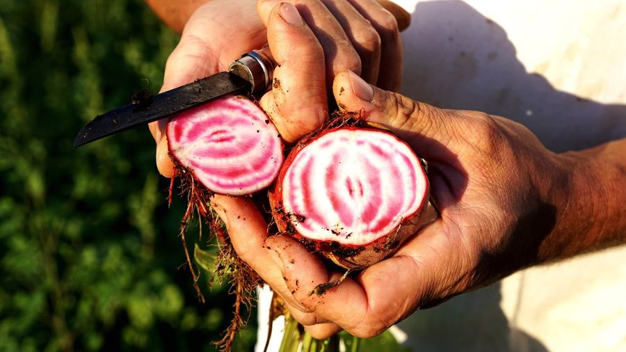 Midsection of man holding beetroot