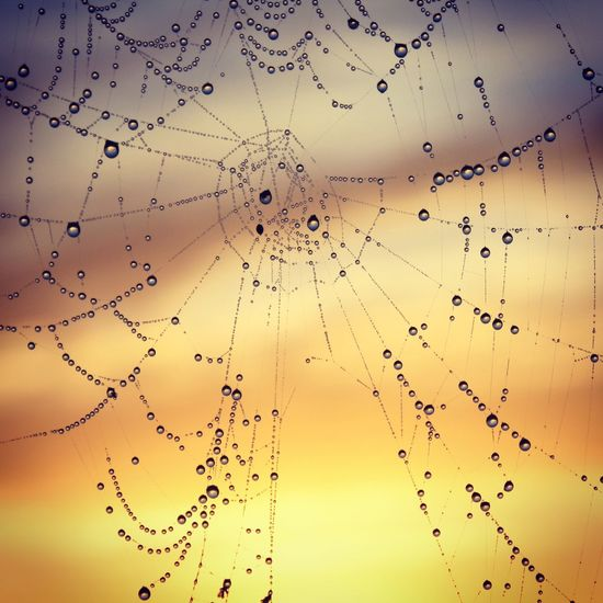 Bejewelled Backgroundblur Close-up Dawn Delicate Beauty Dewdrops Firstlight Focus On Foreground Fragility Low Angle View Nature No People Orange Sky Outdoors Reflections Spider Web Spiderweb Sun Web Showing Imperfection The Great Outdoors - 2016 EyeEm Awards