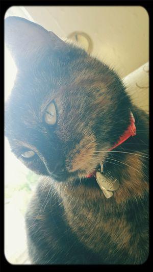 Cat Cat♡ I'm So Fancy New Collar