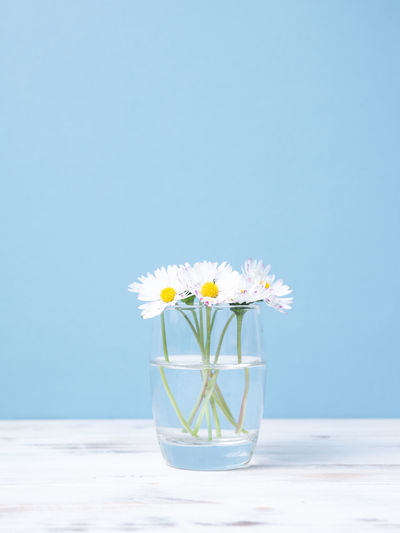 Close-up of daisy flower vase on table against blue sky
