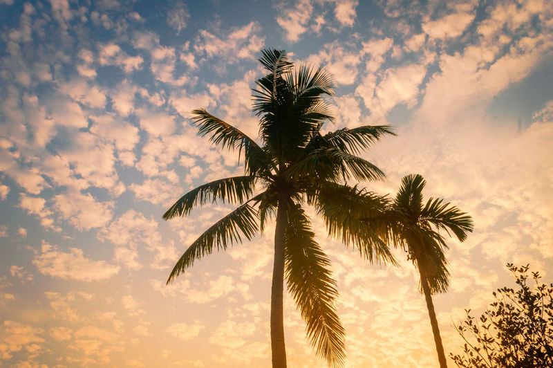 Low angle view of silhouette coconut palm tree against sky