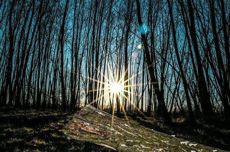 Sunbeams☀ Brenta - Santa Croce Bigolina Sun Sunset Wood Landscape Nature Trees HDR Reflections Nikon Ic_hdr Ic_landscapes Longexposure Landscape_Collection