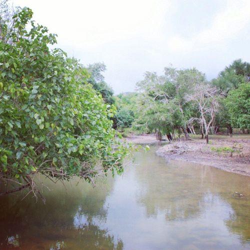 Mencari reptilia. Pulaukomodo Nusatenggaratimur INDONESIA