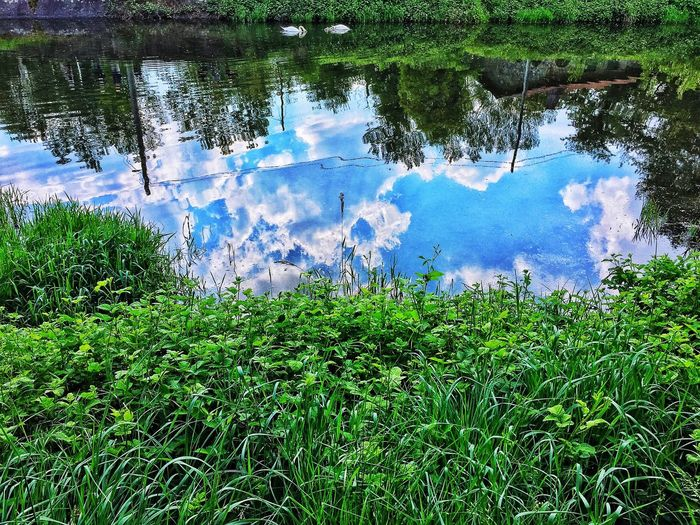Sky Only Tree Scenics Sunlight Tranquility Water Lake Nature Growth Day Green Color Reflection Outdoors Tree Beauty In Nature No People Tranquility Grass Animal Themes Sky