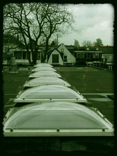 Rooftop From My Point Of View Tree Perspective Pattern Pieces Ceiling Window Bubble Shapes Woerdman Alphen Aan Den Rijn (c) 2016 Shangita Bose All Rights Reserved Things I Like The Architect - 2016 EyeEm Awards Your Design Story Nature's Diversities