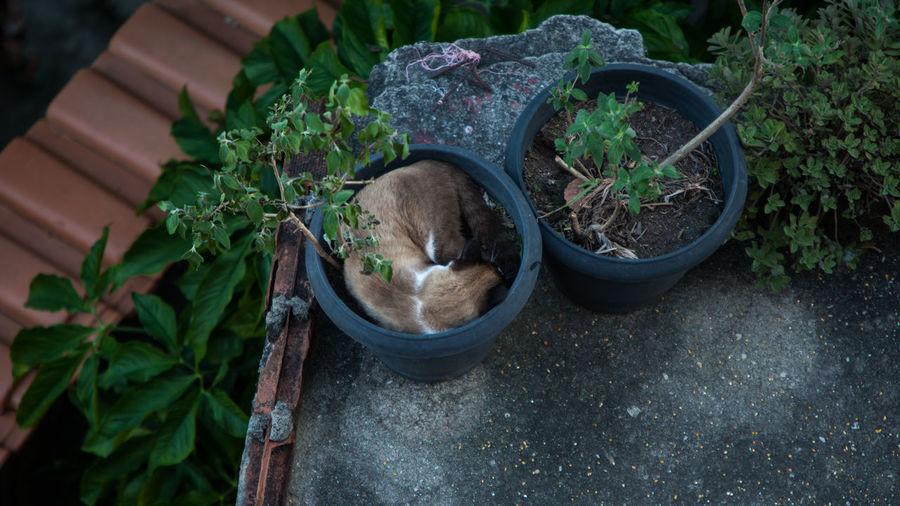 Descanso Plant