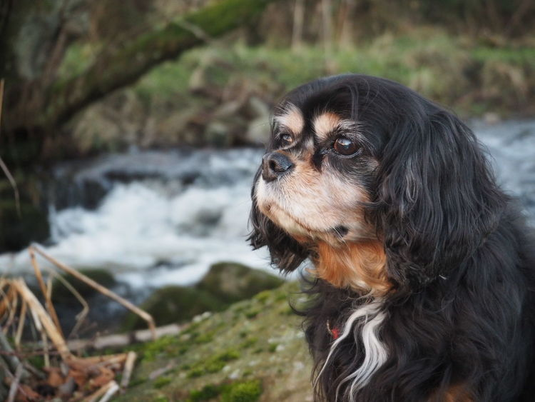 Such a poser! 👌 One Animal Animal Themes Focus On Foreground Dog Water Pets Close-up No People Outdoors Nature Mammal Day Domestic Animals Beauty In Nature River WoodLand Beautiful Scotland Dog Portrait Riverside Stream - Flowing Water Natural Light Nature In The Middle Of Nowhere Sitting