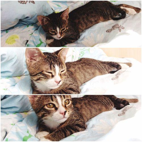 кошка моя любимая кошка Соня