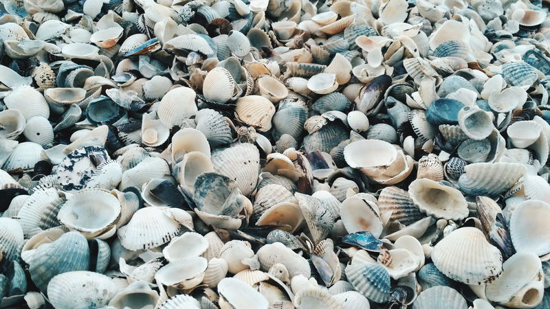 Hidden texture EyeEmNewHere Shells Island Backgrounds Full Frame Pebble Beach Close-up Seashell Shell Animal Shell Horizon Over Water Stone - Object Mussel Oyster  Shore Beach Textured  #urbanana: The Urban Playground
