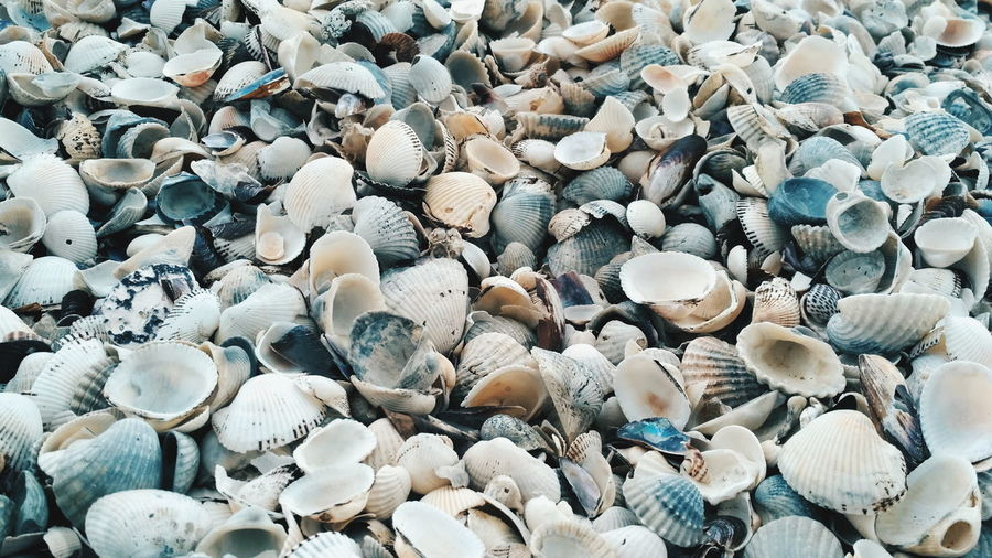 High angle view of shells on beach