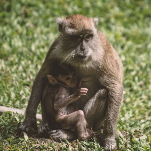 Animals In The Wild Two Animals Monkey Animal Themes Infant Mammal Togetherness Grass Animal Wildlife Sitting Animal Family Field Outdoors Female Animal Young Animal
