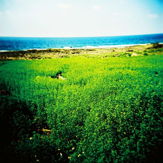 Aboriginal Land Tao  Animal Animal Themes Beauty In Nature Day Grass Green Color Horizon Horizon Over Water Land Lomo Mammal Nature No People Outdoors Plant Scenics - Nature Sea Sky Tranquil Scene Tranquility Water
