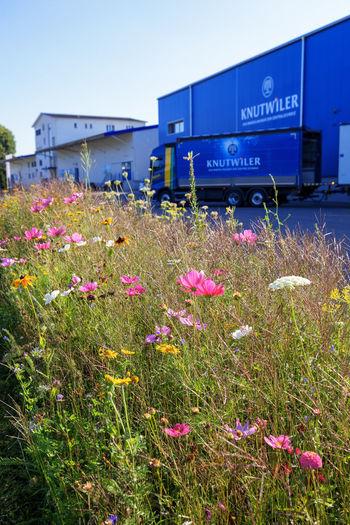 Flowering plants on field against clear sky