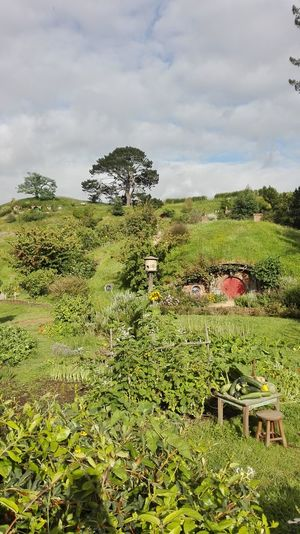Hobbit Hobbit House Beauty In Nature Cloud - Sky Day Field Grass Green Color Growth Hobbies Hobbiton Hobbiton Movie Set Tours Hobbitonmovieset Landscape Matamata Matamata NZ Nature No People Outdoors Plant Scenics Sky Theshire Tranquility Tree