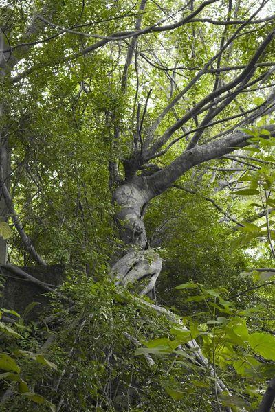 Emerge Human Tree Happy Halloween Split Toning Nature Supernatural Surrealism