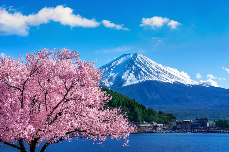 Fuji mountain and cherry blossoms in spring, Japan. Beauty In Nature Tree Mountain Sky Plant Nature Snow Cloud - Sky Scenics - Nature Cold Temperature Water Pink Color Flower Flowering Plant Winter Cherry Blossom Blossom Day Snowcapped Mountain Springtime No People Outdoors Cherry Tree
