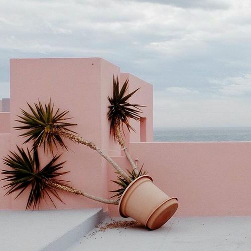 Millennial Pink EyeEmNewHere ❤❤❤ Palm Tree Nature Plant